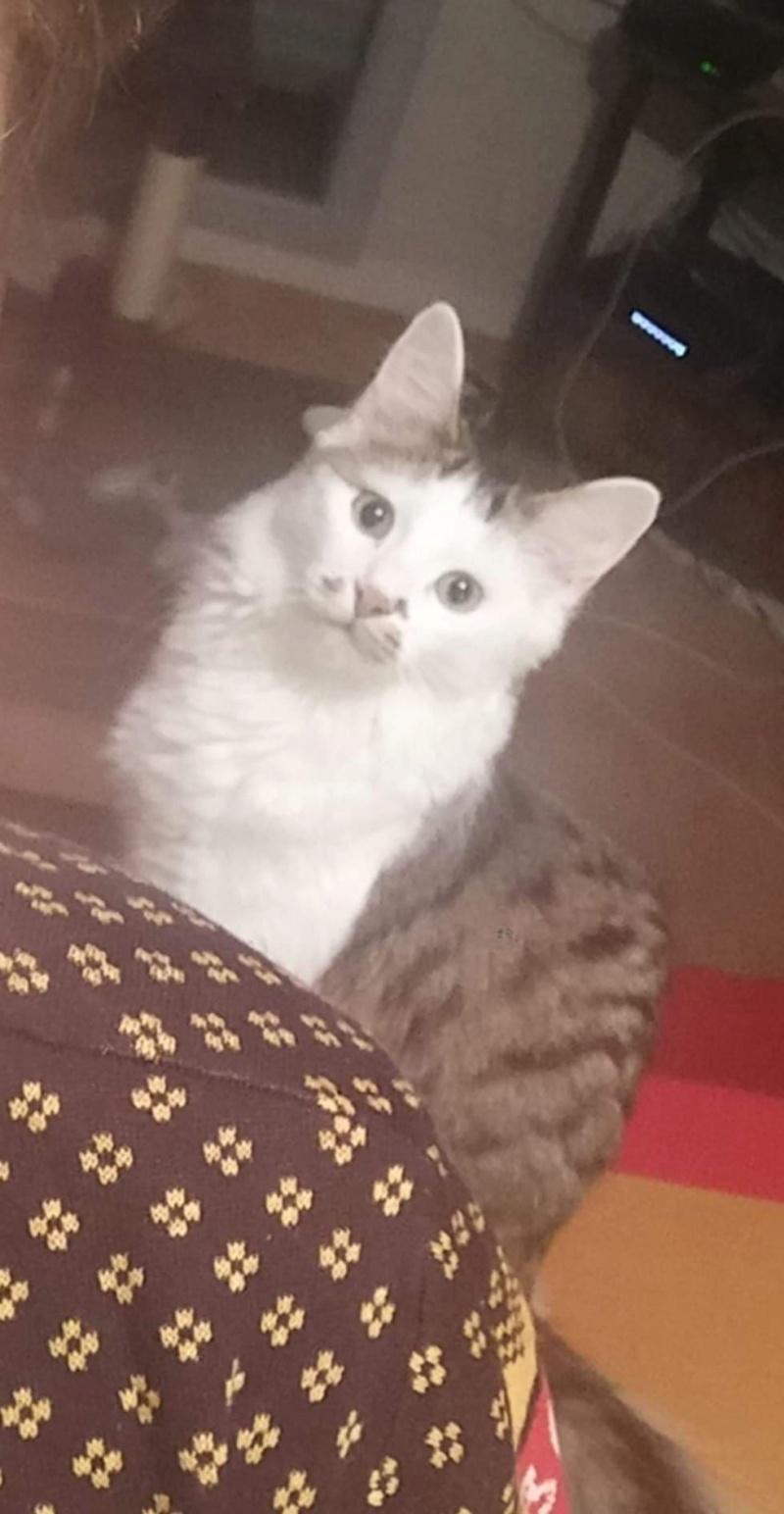 ONI, chaton mâle blanc et noir, né le 15/03/2018 48383611