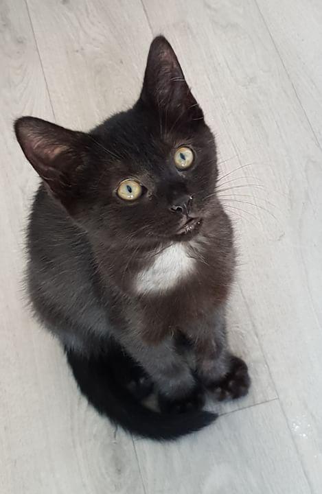 Oxana, chatonne noire, née le 03 mai 2018 91126d10