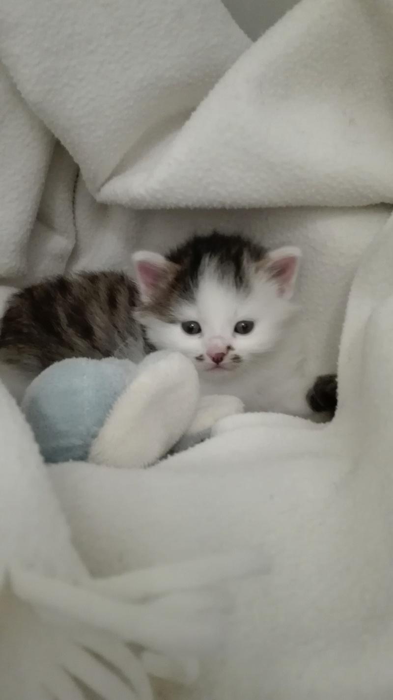 ONI, chaton mâle blanc et noir, né le 15/03/2018 Img_2013
