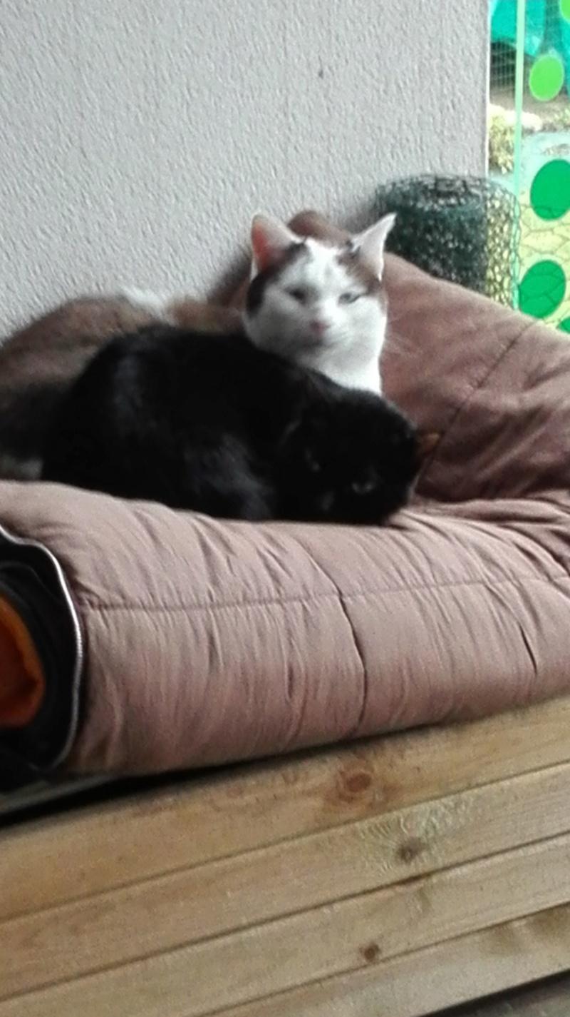 Nuty chat, mâle robe noire né le 01/07/2017, en FA longue durée Img_2119