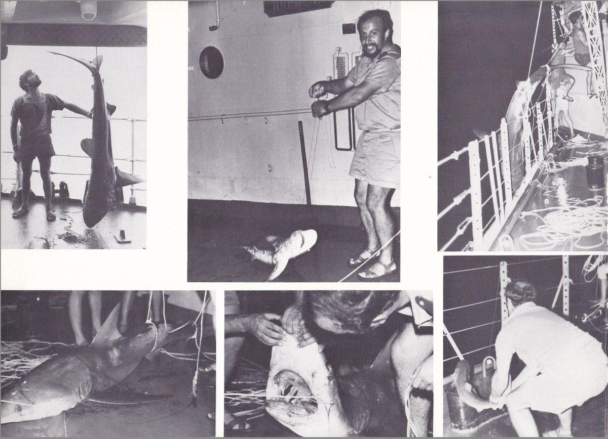 ENSEIGNE DE VAISSEAU HENRY (AE) Tome 2 - Page 16 Requin11