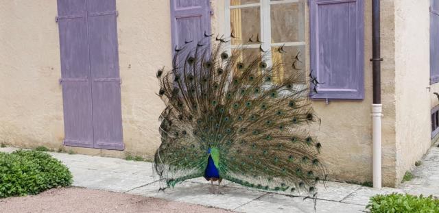 [Autres voyages/France]  week-end de Pentecôte en Dordogne  20191837