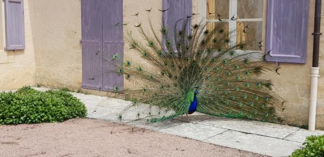 [Autres voyages/France]  week-end de Pentecôte en Dordogne  20191838