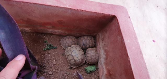 [Maroc Camp/Dernières nouvelles]  Confinement camping Takat  20200428