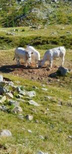 [Autres voyages/France] Sortie dans les Alpes 20210887