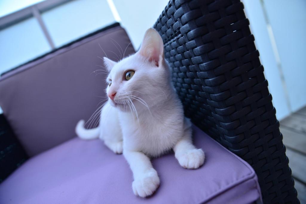 OUSTI, mâle blanc, type chat de maison, né début avril 2018 Dsc_5513