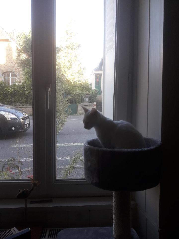 OUSTI, mâle blanc, type chat de maison, né début avril 2018 Resize10