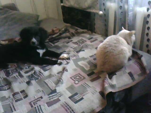 Собачья площадка - Страница 2 Image610