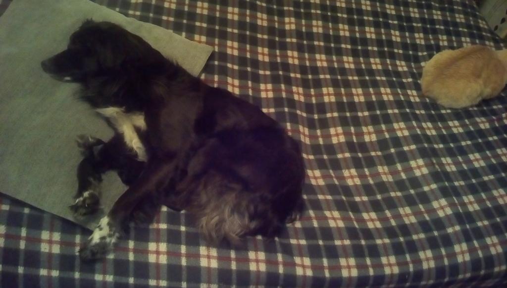 Собачья площадка - Страница 2 Img_2010