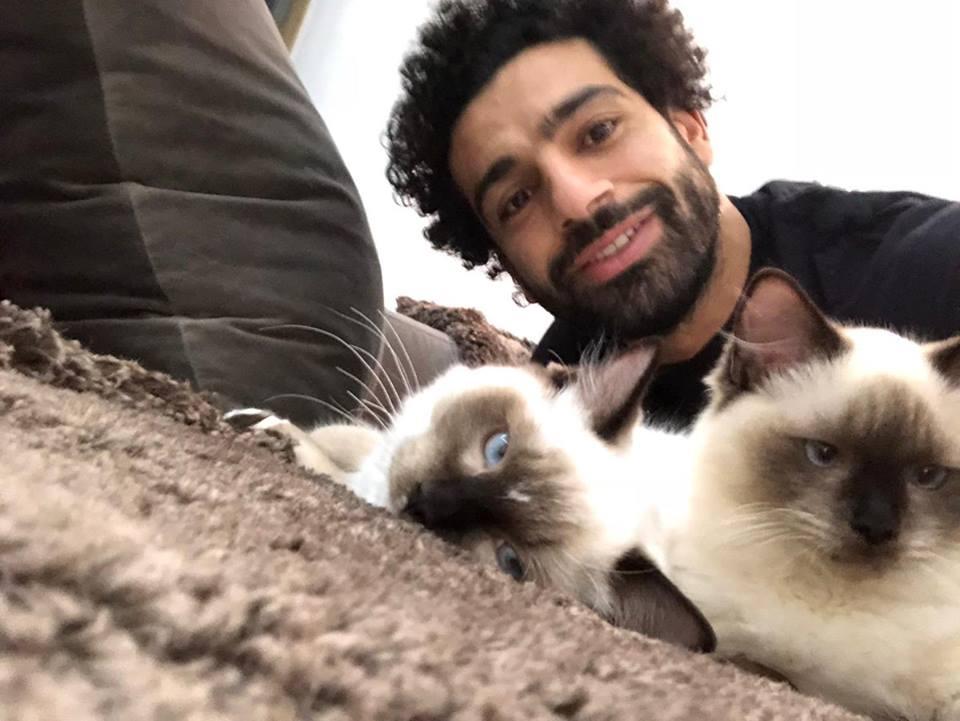 محمد صلاح  ينتقد قرار مصر بتصدير القطط والكلاب للدول التى تأكلها 46976910