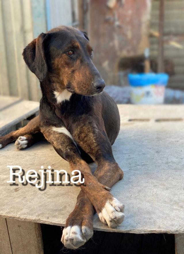 REJINA, F, X, TAILLE MOYENNE (SOTCHI - RUSSIE) réservée Vac Anima 10426910