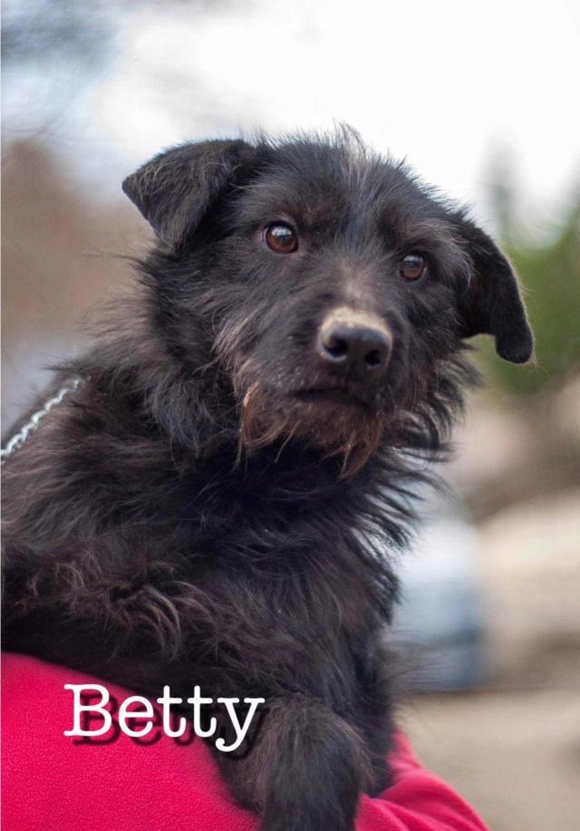 BETTY, F, X, TAILLE PETITE (SOTCHI - RUSSIE), RESERVEE FA Karine B (Depart67)  10600610