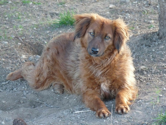 FLUFFY, née 2015, 10 kg, rigolote - (BELLA) - Prise en charge REFUGE PAS SI BETES - Page 3 12019910