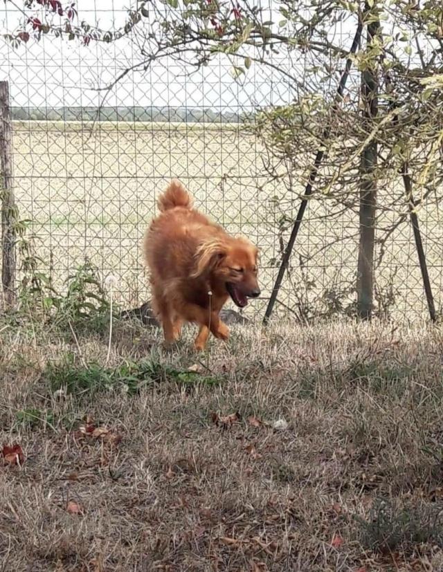 FLUFFY, née 2015, 10 kg, rigolote - (BELLA) - Prise en charge REFUGE PAS SI BETES - Page 3 12020210