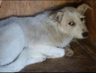 BAYLEE, MF, CROISE, TAILLE MOYENNE (PIATRA FOURRIERE) 93379410