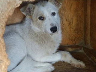 BAYLEE, MF, CROISE, TAILLE MOYENNE (PIATRA FOURRIERE) 93418511