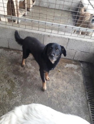 RYDER, M, CROISE, TAILLE MOYENNE (PIATRA FOURRIERE) 95608810