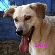 SERBIE - chiens prêts à rentrer (refuge de Bella et pensions) Daia10