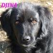 SERBIE - chiens prêts à rentrer (refuge de Bella et pensions) Djina11