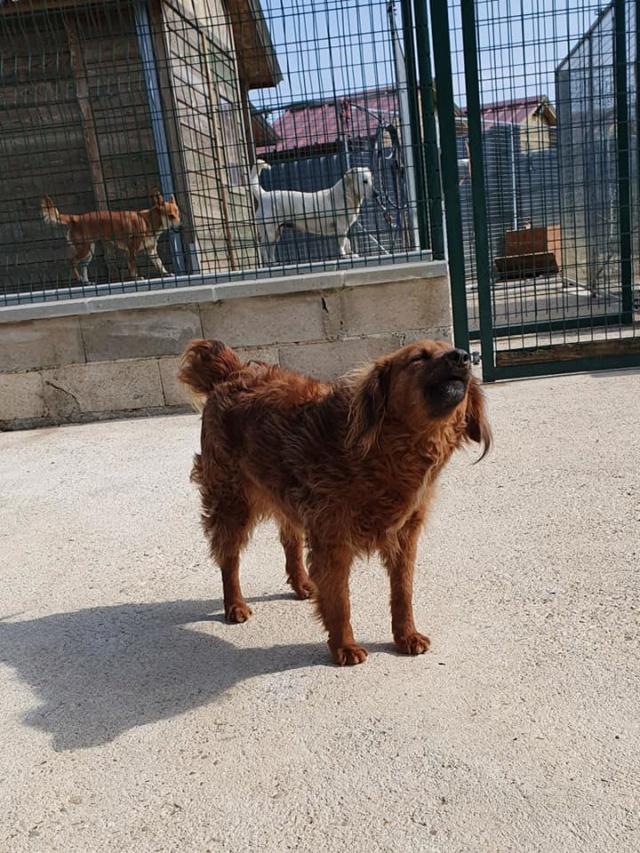 FLUFFY, née 2015, 10 kg, rigolote - (BELLA) - Prise en charge REFUGE PAS SI BETES - Page 3 Fluffy10
