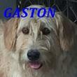 SERBIE - chiens prêts à rentrer (refuge de Bella et pensions) Gaston10