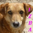 SERBIE - chiens prêts à rentrer (refuge de Bella et pensions) Izba12