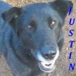 SERBIE - chiens prêts à rentrer (refuge de Bella et pensions) Justin13