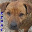 SERBIE - chiens prêts à rentrer (refuge de Bella et pensions) Kenny10