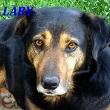 SERBIE - chiens prêts à rentrer (refuge de Bella et pensions) Lary11