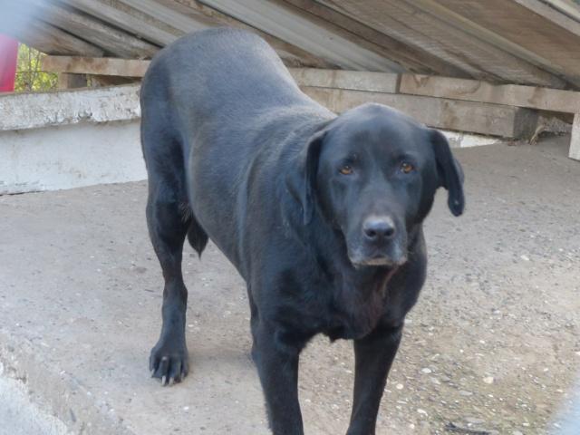 LEPA, F-X, née 2013 (BELLA) chienne dynamique -  Prise en charge Association GALIA - Page 4 Lepa11