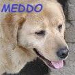 SERBIE - chiens prêts à rentrer (refuge de Bella et pensions) Medda110