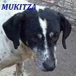 SERBIE - chiens prêts à rentrer (refuge de Bella et pensions) Mukitz10