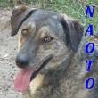 SERBIE - chiens prêts à rentrer (refuge de Bella et pensions) Naoto10