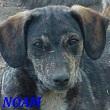 SERBIE - chiens prêts à rentrer (refuge de Bella et pensions) Noam10