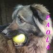 SERBIE - chiens prêts à rentrer (refuge de Bella et pensions) Paola10