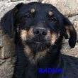 SERBIE - chiens prêts à rentrer (refuge de Bella et pensions) Radha10