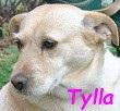 SERBIE - chiens prêts à rentrer (refuge de Bella et pensions) Tylla610