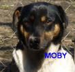 SERBIE - chiens prêts à rentrer (refuge de Bella et pensions) Vv-mob10