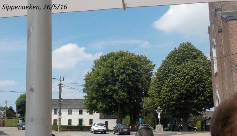 3 fourrés dans les Fourons (26/05/16), et Roméo les y a retrouvés ! Dscn3515