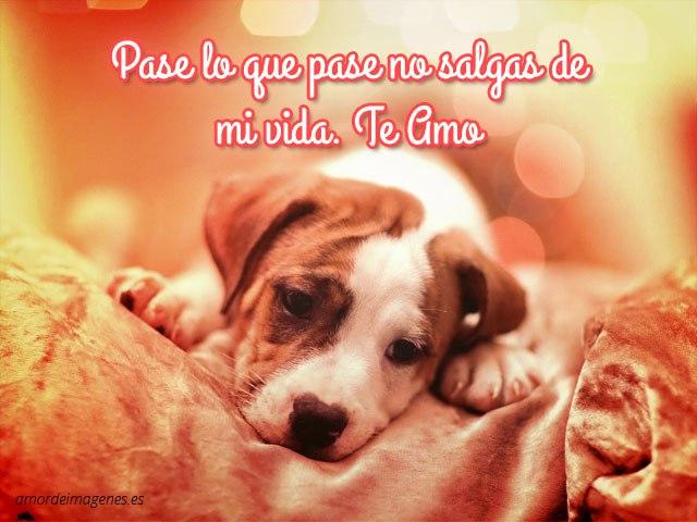 buuuu xD te amo Imagen13