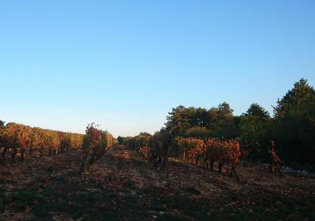 Premier gibier prélevé Vignes10