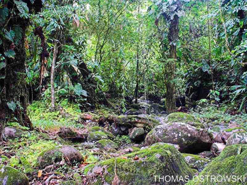 Projet terrarium tropicale et cohabitation inter-espèce  Auratu10