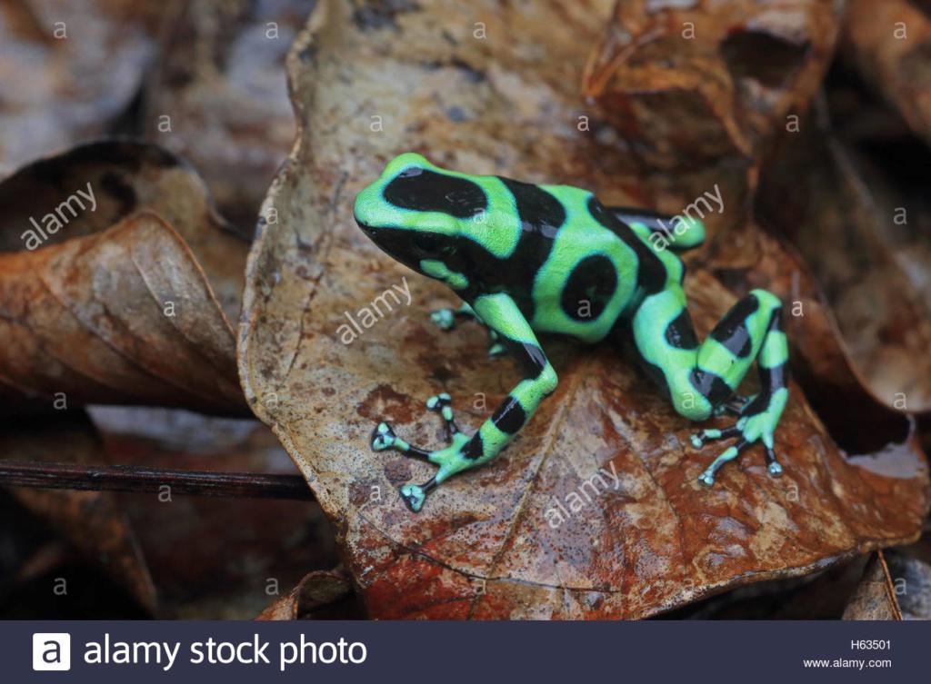 Projet terrarium tropicale et cohabitation inter-espèce  Green-10