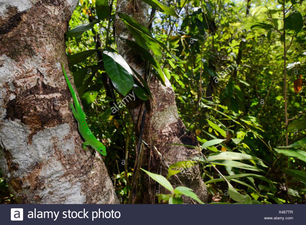 Projet terrarium tropicale et cohabitation inter-espèce  Madaga10
