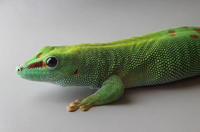 Projet terrarium tropicale et cohabitation inter-espèce  Phelsu10