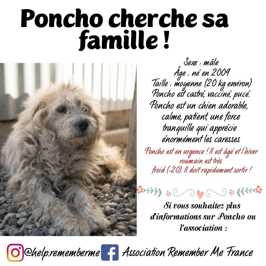 URGENCE pour PONCHO - mâle croisé, âgé, de taille moyenne, né en 2009 (PASCANI) - REMEMBER ME LAND- DECEDE - Page 2 15443010