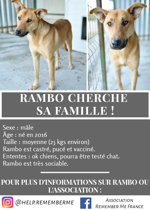 RAMBO - mâle, croisé, de taille moyenne, né en 2016 - REMEMBER ME LAND - Page 2 20191010