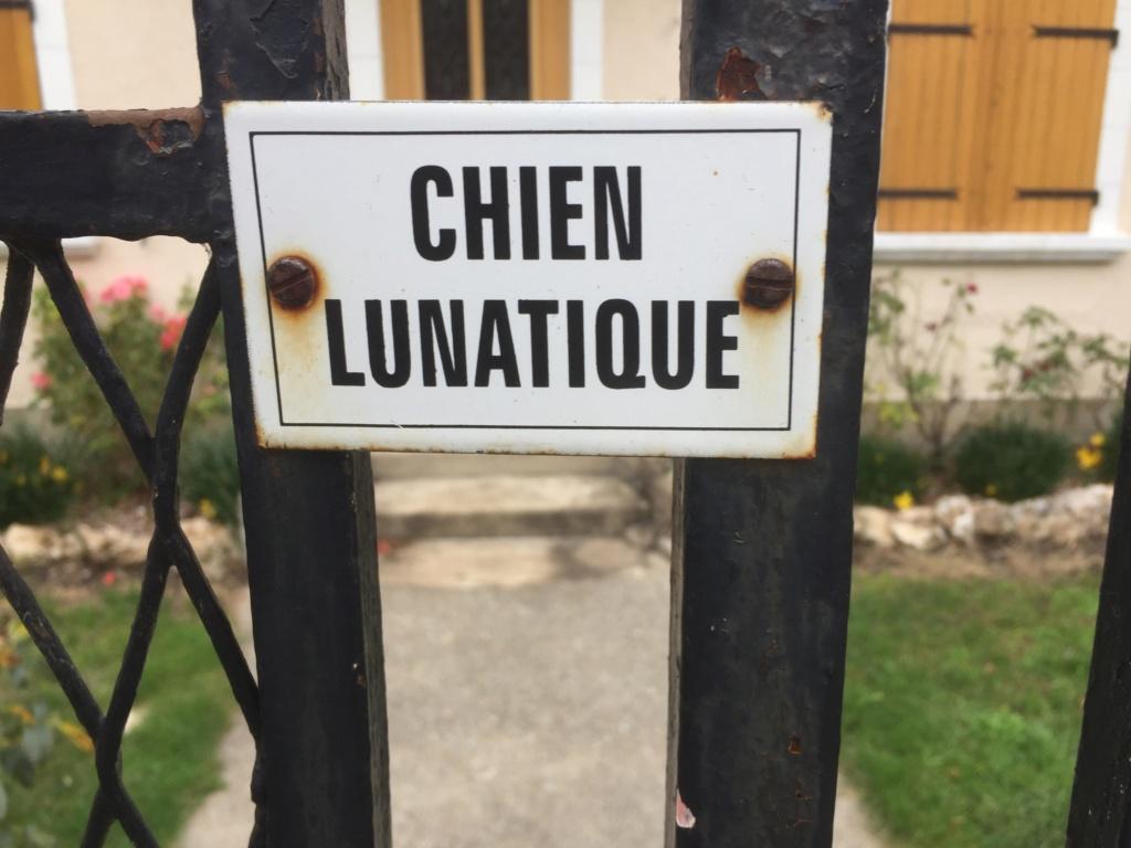 Sujet d'actualité Chien_10