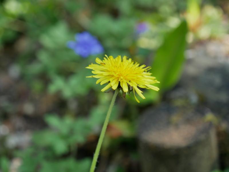 Ballade digestive dans mon jardin P1040024