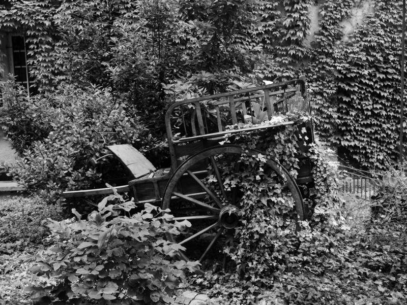 Charette abandonnée  P1040411